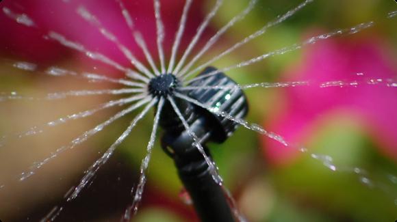 Метод полива растений сверху