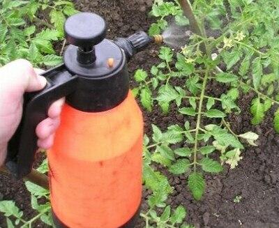 Не забывайте ухаживать за томатами в теплице