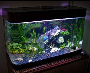 Поликарбонатный аквариум