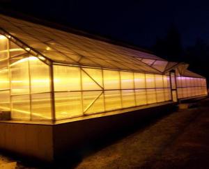 Создаем правильное осветление в теплице