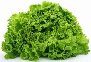 Выращиваем салат в теплице из поликарбоната