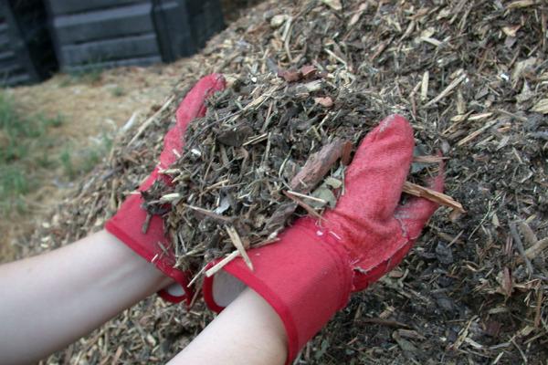 Мульчирование почвы для дынь