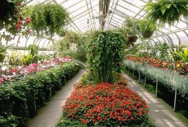 Цветы в полимерной теплице