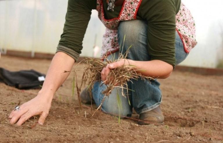 Сбор сухой травы в теплице