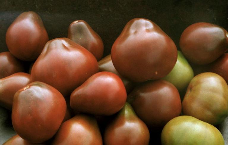 Спелые томаты Черный принц