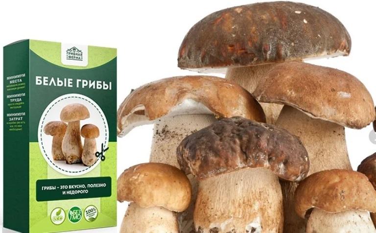 Белый гриб - набор