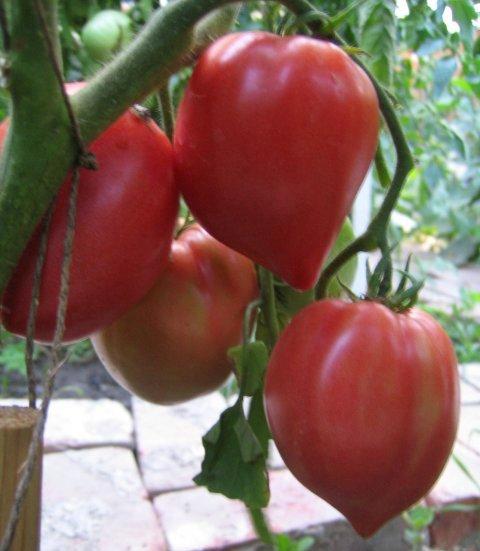 Бычье сердце - томаты