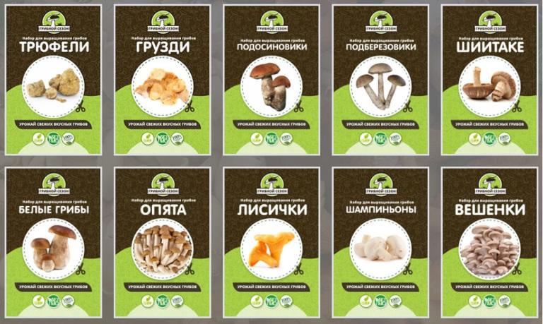 Виды грибов для выращивания